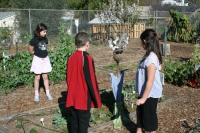 Students Check Out a Scarecrow in The Garden