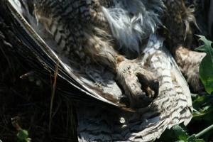 OwlTalons