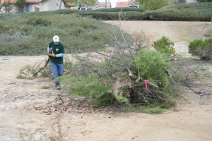 Non-native vegetation removal