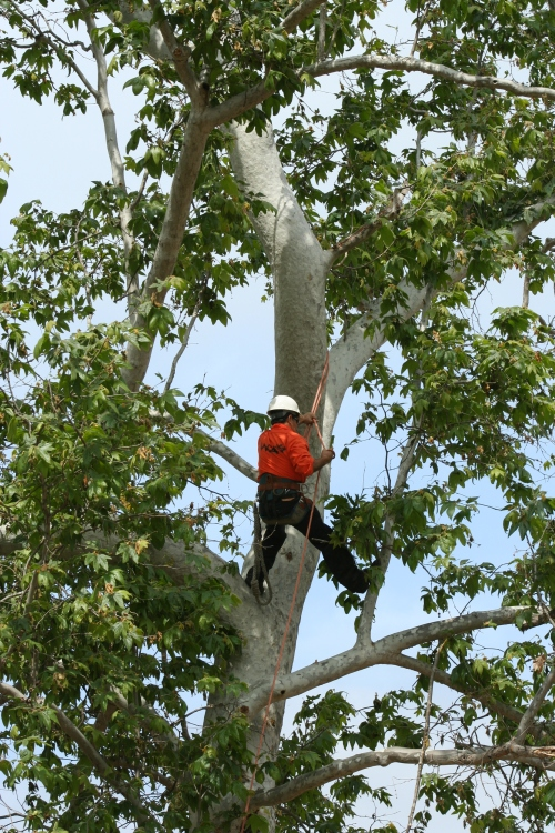 WCA Tree Climbing Demonstration