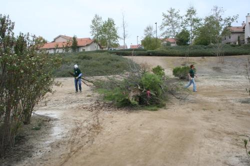 Mast Park Tamarisk Removal
